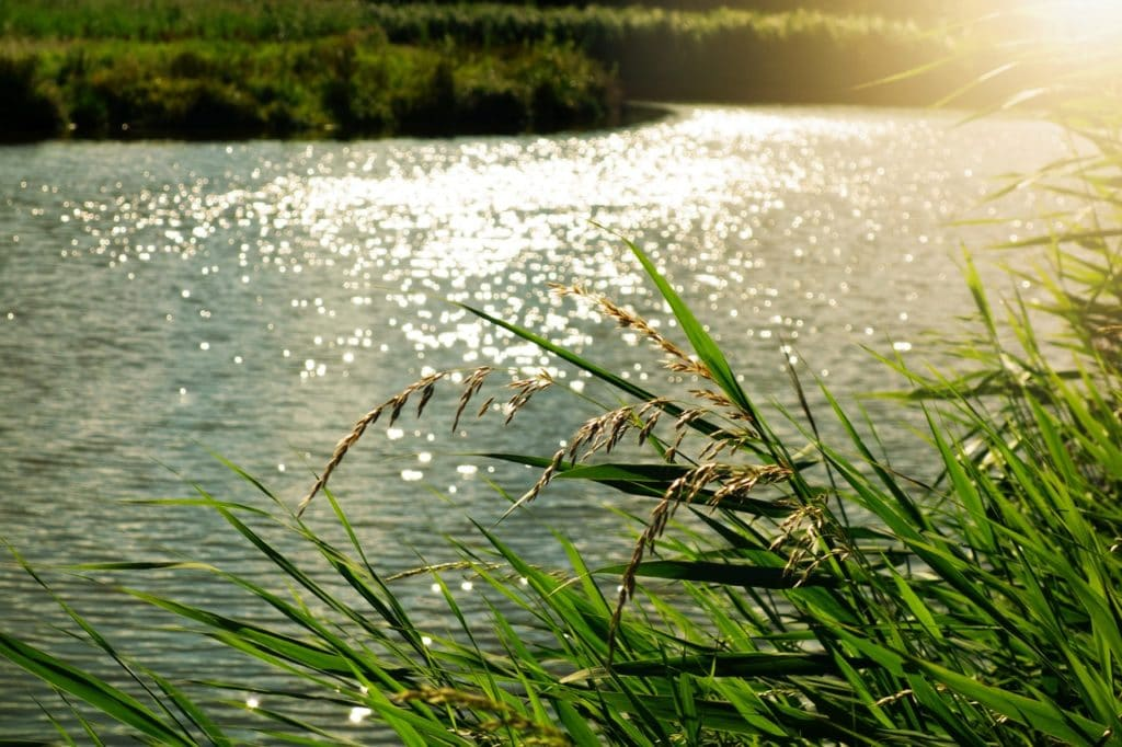 river with green grass and sunny